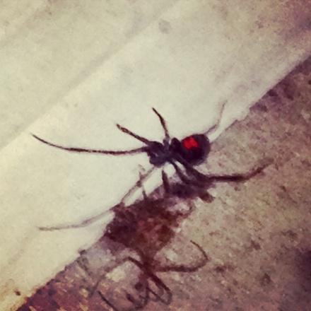 Husband. Father. Spider-slayer. Hero.